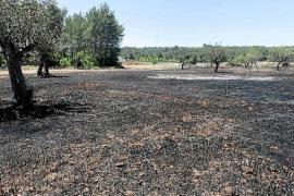 Una quema descontrolada arrasa 6.000 m² de terreno en Sant Llorenç