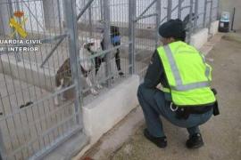 Prisión sin fianza para el dueño de los perros que mataron a un jubilado en Dènia