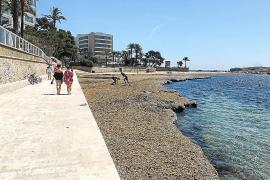 Vecinos y empresarios reclaman a Vila que limpie la playa de es Viver