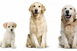Reeducación del perro geriátrico