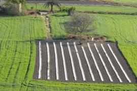 Amics de la Terra pide que la Ley Agraria dé más apoyo a la agricultura ecológica