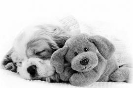 ¿Qué problemas de comportamiento puede tener un cachorro?