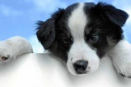Educación de cachorros de perro