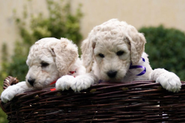 El número de perros censados en Baleares crece un 17% desde 2014, hasta los 330.407