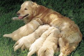 Consejos para el parto de las perras