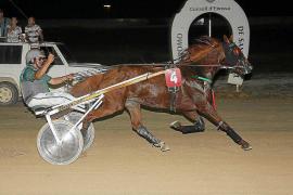 El caballo francés 'Texas Haufor' exhibe su nivel en las carreras de Sant Rafel