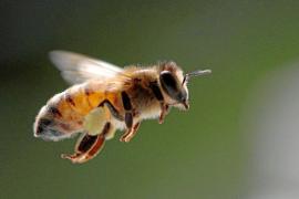 Mallorca exporta abejas