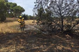 Alarma en Cala de Bou por un nuevo fuego y la posible presencia de un incendiario