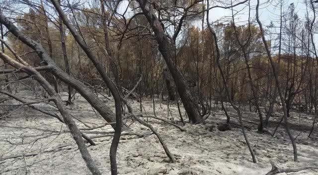 Extinguido el incendio de Cala Saona