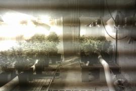 La Guardia Civil halla en una casa material de jardín robado y 67 plantas de 'maría'