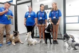 Dogspital, un proyecto pionero en España de visitas de perros a pacientes ingresados