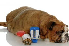 Terapia en animales diabéticos