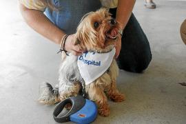 León supera con total éxito sus pruebas y será el primer perro en visitar Can Misses