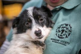 Rescatan a 149 cachorros que iban a ser electrocutados para hacer sopa picante