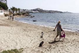 Baleares ya cuenta con diez playas caninas, cinco de ellas en Mallorca
