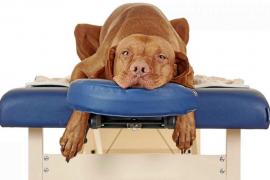 Hernia de disco en el perro