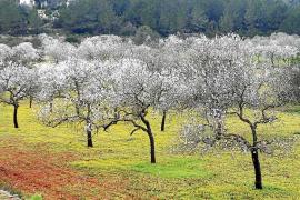 El Consell quiere que la 'ecotasa' financie la conservación del campo
