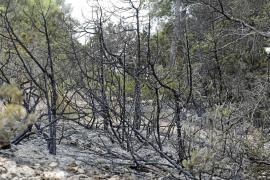 Especialistas del Seprona apoyan la investigación del incendio de sa Talaia
