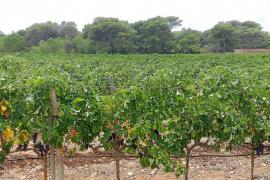 Formentera: lluvia 4 meses después