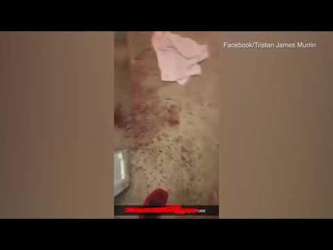 Sangrienta reacción de un perro guardián al descubrir a un intruso
