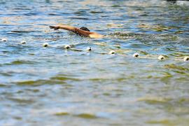El agua amarillenta espanta a los bañistas en la playa de Cala Vedella