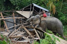 Las peores inundaciones por el monzón en años dejan más de 1.200 muertos en el sur de Asia