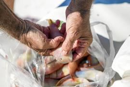 Primer fin de semana revuelto para los amantes de la pesca del raor