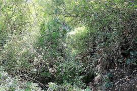 Santa Eulària pide la limpieza del río y cinco torrentes para evitar inundaciones