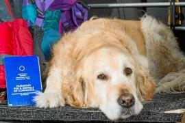 ¿Qué documentos debe tener mi mascota?
