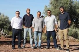 Denominación de Origen Protegida (DOP) Oliva de Mallorca