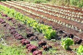 «Mi lucha es combatir la ignorancia sobre la alimentación»