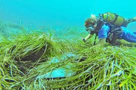 La ampliación de la zona de baño en Formentera se hará en puntos con «conflictos entre usos»