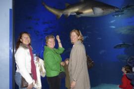 Concierto solidario en el Palma Aquarium