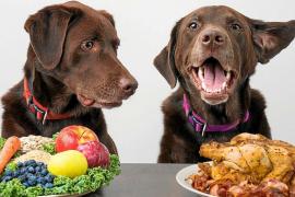 ¿Qué son las dietas crudas?