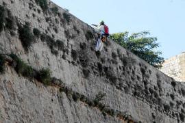 Comienza la limpieza de los 18.000 metros cuadrados de las murallas renacentistas