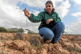 La sequía afectará al cultivo de 2018