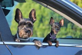 Apoyo unánime en el Congreso para tramitar la reforma legal que dejará de considerar 'cosas' a las mascotas