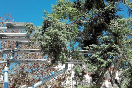 EPIC denuncia la «inutilidad» de las placas del árbol solar de Vara de Rey