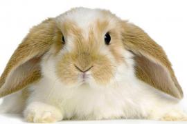 Los conejos como nuevos animales de compañía
