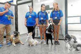 El Govern estudia ampliar a Mallorca el proyecto Dogspital del hospital Can Misses