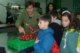 Alumnes de 4rt de primària del Ceip Inspector Joan Capó de Felanitx visiten Grup Serra i Agromallorca