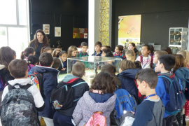 Alumnes de 3er i 4rt de primària del Ceip Port de Pollença varen visitar Es Parc Tirme
