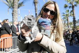 La chinchilla 'Goku', propiedad de Almudena, fue el último animal en ser bendecido por el obispo de Ibiza y Formentera ayer ante