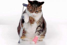 ¡Tenemos que operar a mi gato!