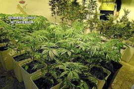 La Guardia Civil desmantela una 'casa laboratorio' de marihuana y arresta a su dueño en Santa Gertrudis