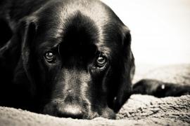 ¿Por qué mi perro tiene miedo?