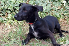 Cortar el rabo o las orejas a las mascotas o regalarlas como premio o recompensa está prohibido desde hoy en España