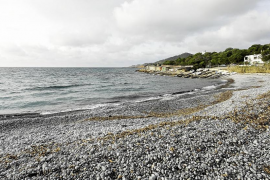 Operación limpieza en Ses Salines para ayudar al Chorlitejo Patinegro