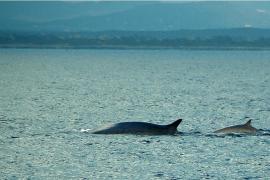 Oceana pide que se «siga adelante» en  la ampliación del Parque Nacional de Cabrera