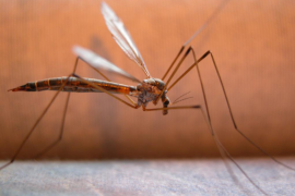 El mosquito es el enemigo